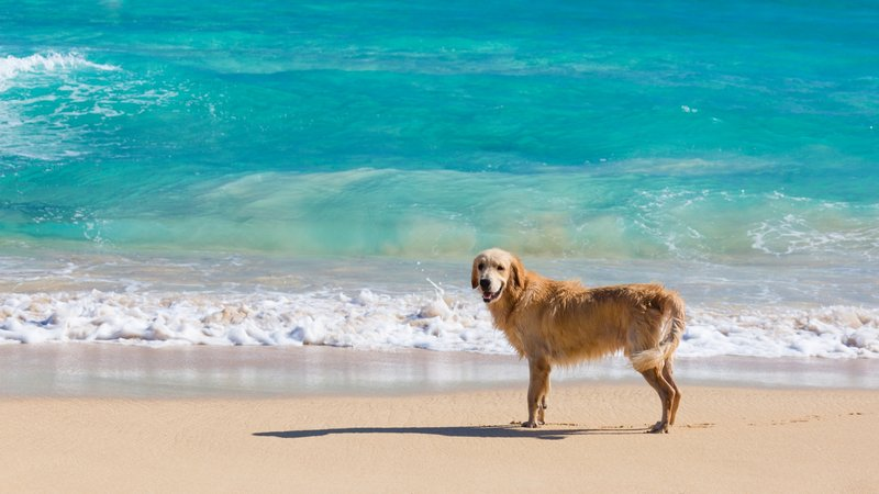 pet friendly beach