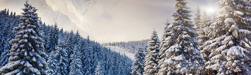 winter wonderlands Pacific Northwest