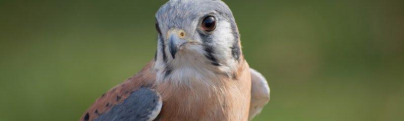 birds Leavenworth